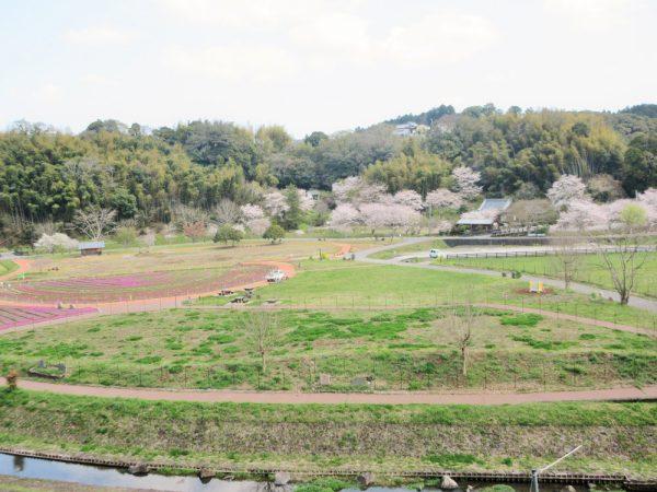 芝桜とハートの小路