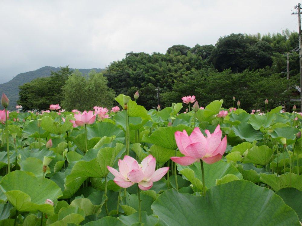 形よく咲いた花