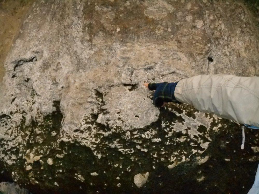 苔類に浸食された部分