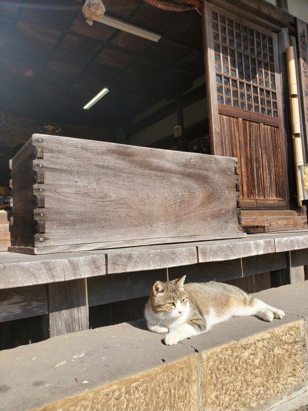 満月寺ネコ