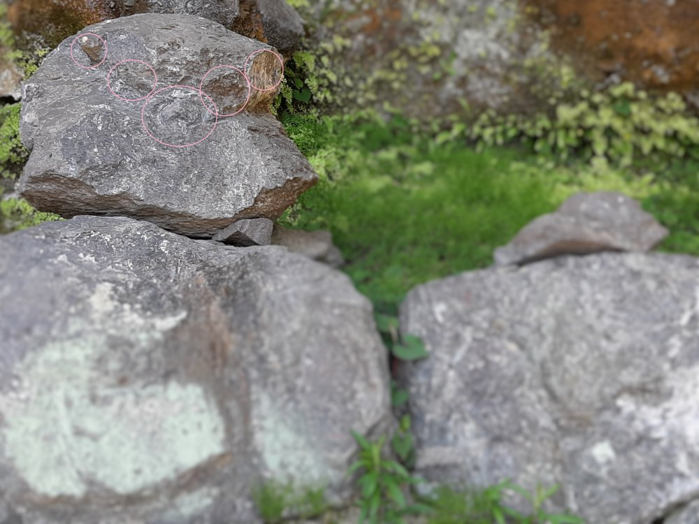 頭部分の岩