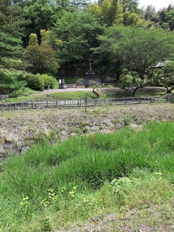 満月寺の蓮池