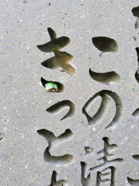 カエル き